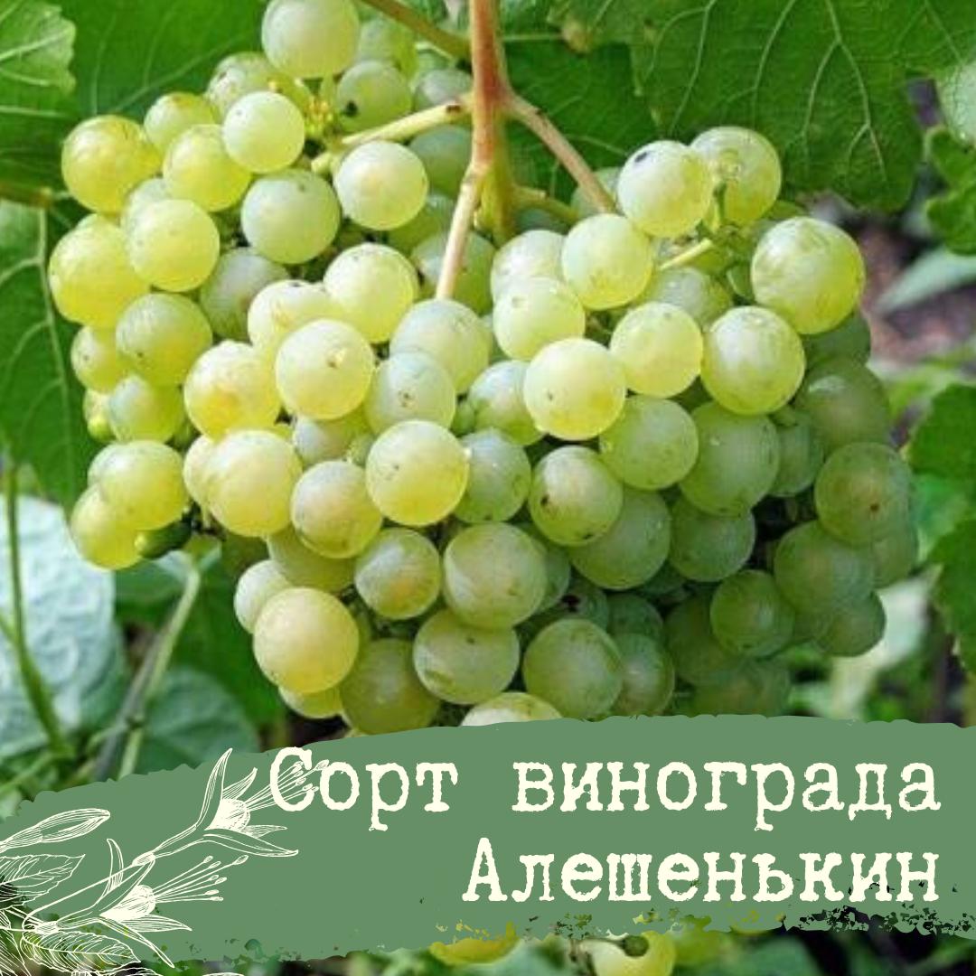Алешенькин